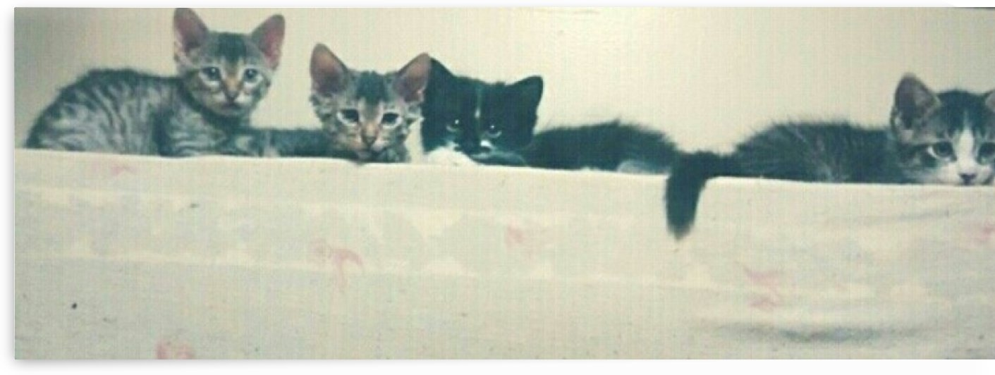 Family of Kittens by Kayathiri Vaithilingam