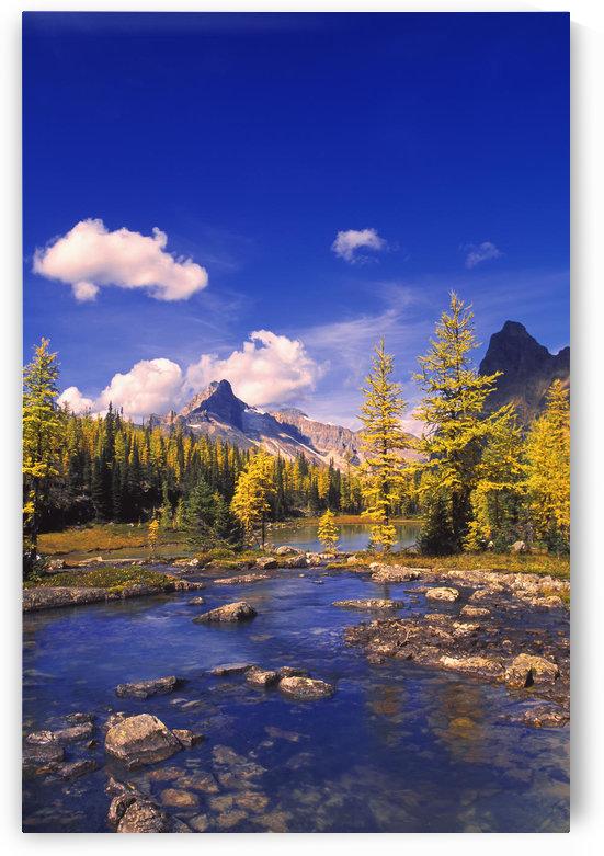 A Scenic Creek by PacificStock