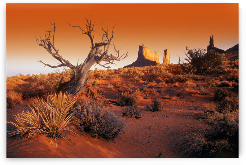 Dead Tree In Desert Monument Valley, United States Of America by PacificStock