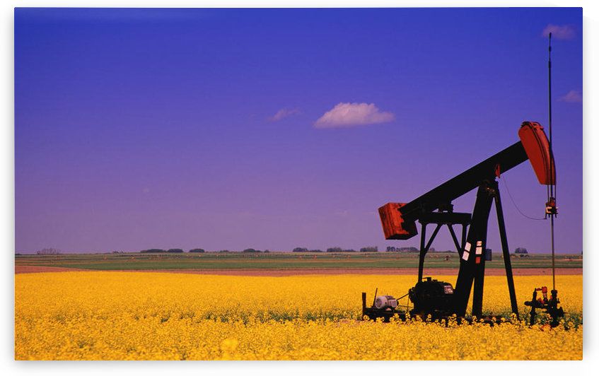 Pumpjack In A Canola Field by PacificStock