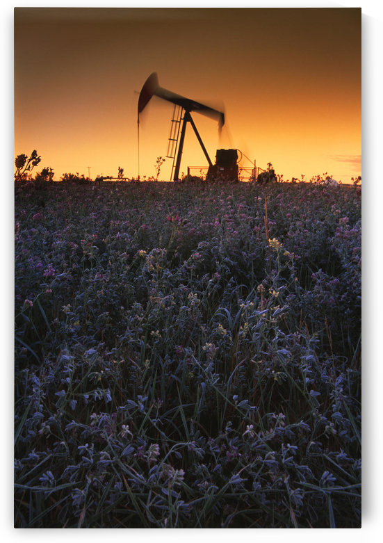 Pumpjack In A Field, Alberta, Canada by PacificStock