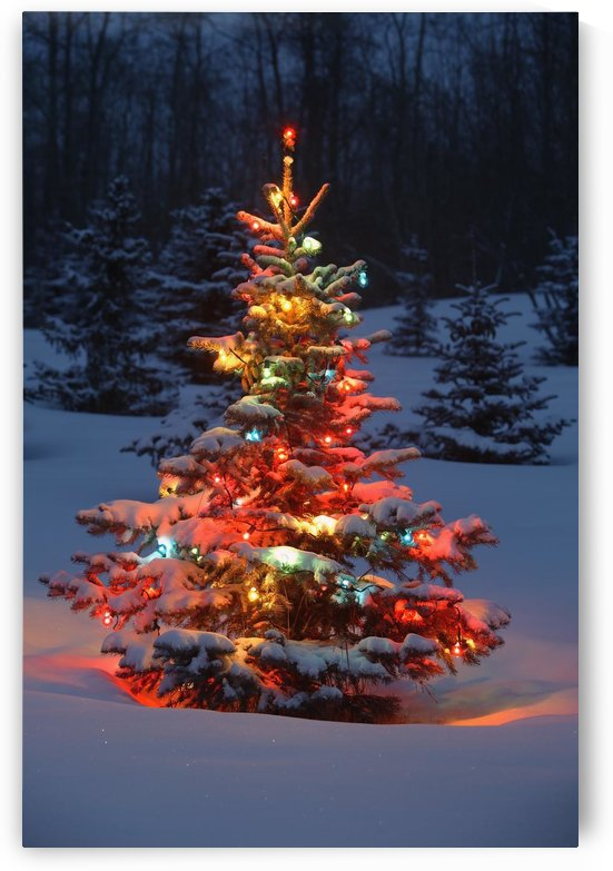 Christmas Tree With Lights Outdoors In The Forest by PacificStock