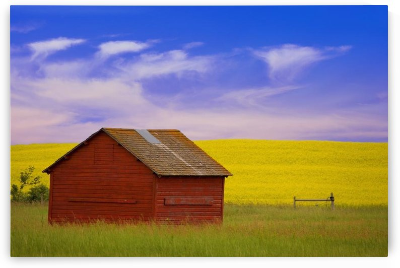 A Red Farm Building Against A Canola Field by PacificStock