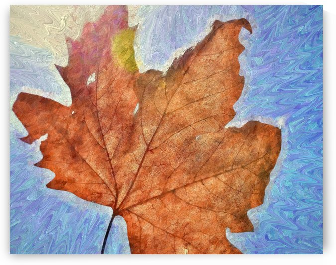 Autumn Leaves Macro 3 Abstract 1 by Linda Brody