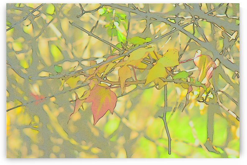 Leaves Macro 5 Abstract 1 by Linda Brody