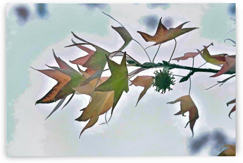Autumn Leaves Macro 6 by Linda Brody