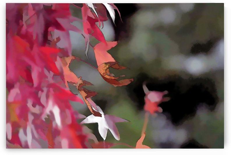 Autumn Leaves Macro 7  by Linda Brody