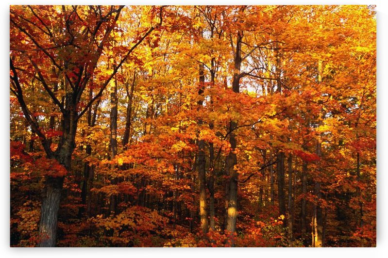 A Vibrant Forest In The Fall by PacificStock
