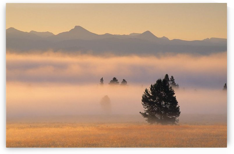 Fog At Sunrise, Pelican Valley, Yellowstone National Park, Wyoming, Usa by PacificStock