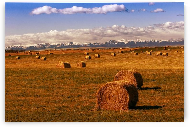 Hay Bales by PacificStock