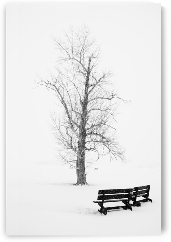 Public Park In Winter by PacificStock