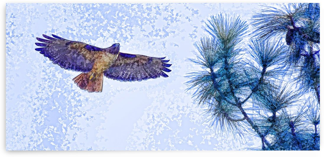 Red Shouldered Hawk Abstract 2 by Linda Brody