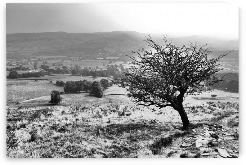 Last tree by Andy Jamieson
