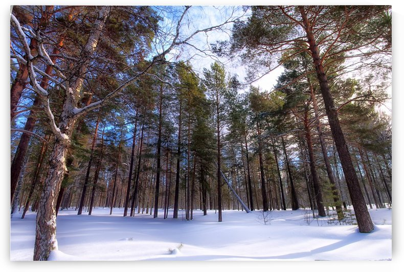 Winter. Forest. Light by MNWind