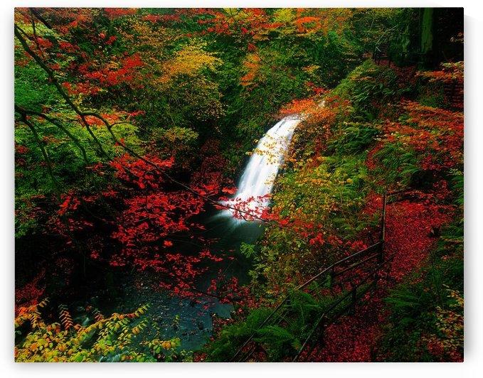 Glenoe Waterfall And Glen, Co Antrim, Ireland by PacificStock