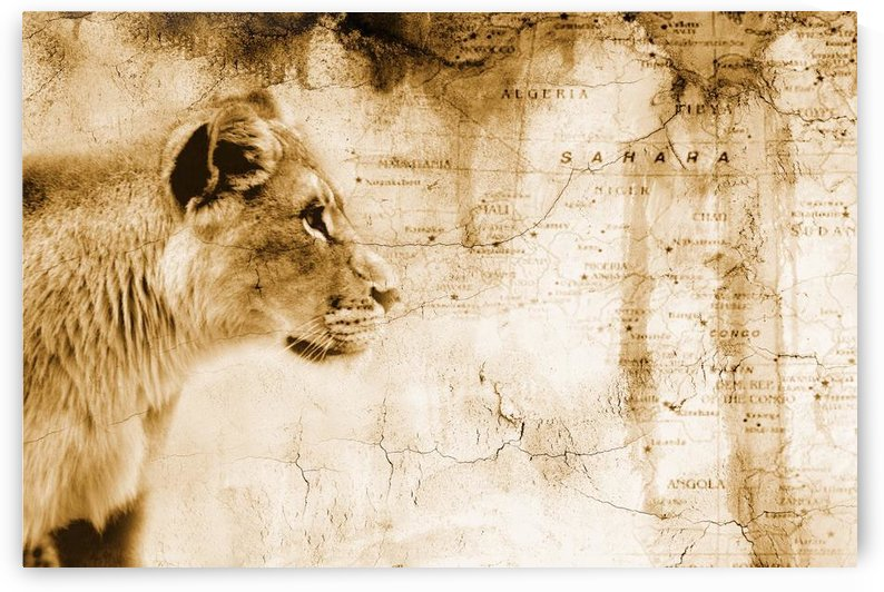 Lion In Front Of An Old Map Of Africa by PacificStock