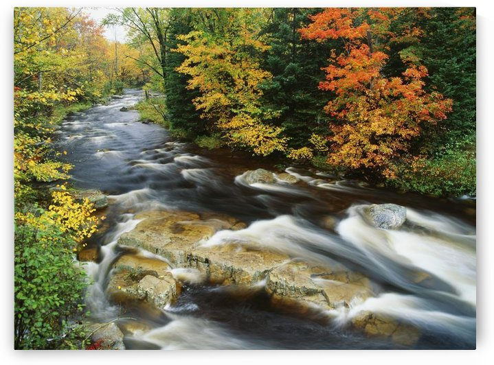 Stream Flowing Through Forest In Vermont, Usa by PacificStock