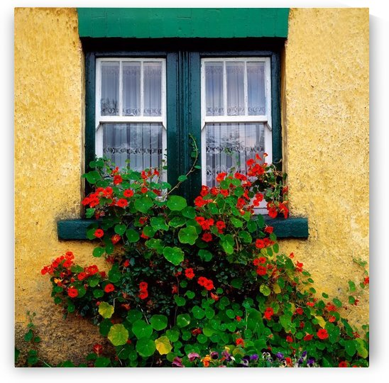 Cottage Window, Co Antrim, Ireland by PacificStock