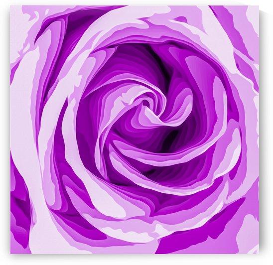 closeup purple rose texture background by TimmyLA