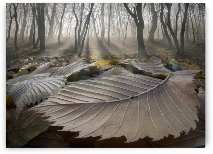 The Fallen Ones by Adrian Borda