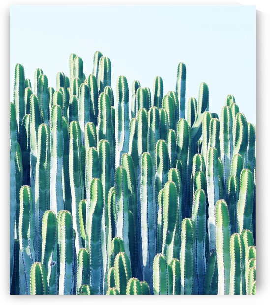Cactus by 83 Oranges