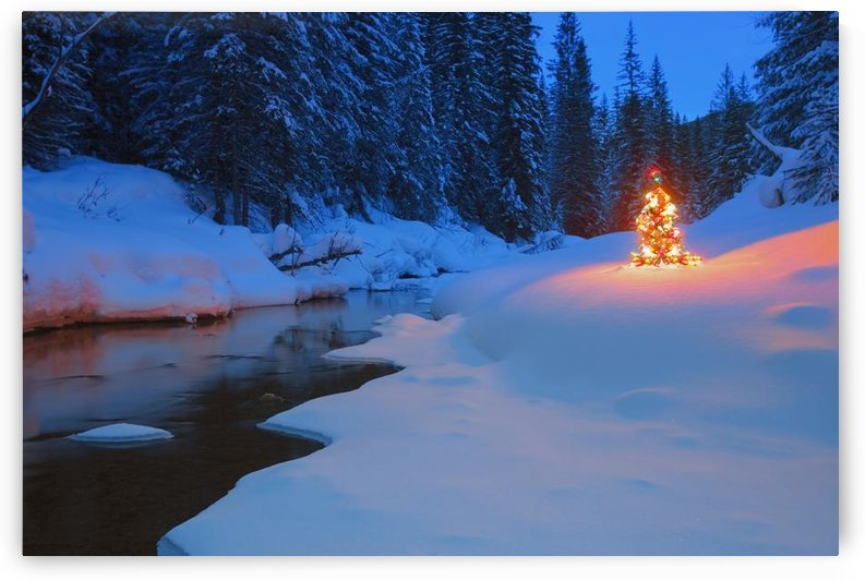 Glowing Christmas Tree By Mountain Stream by PacificStock