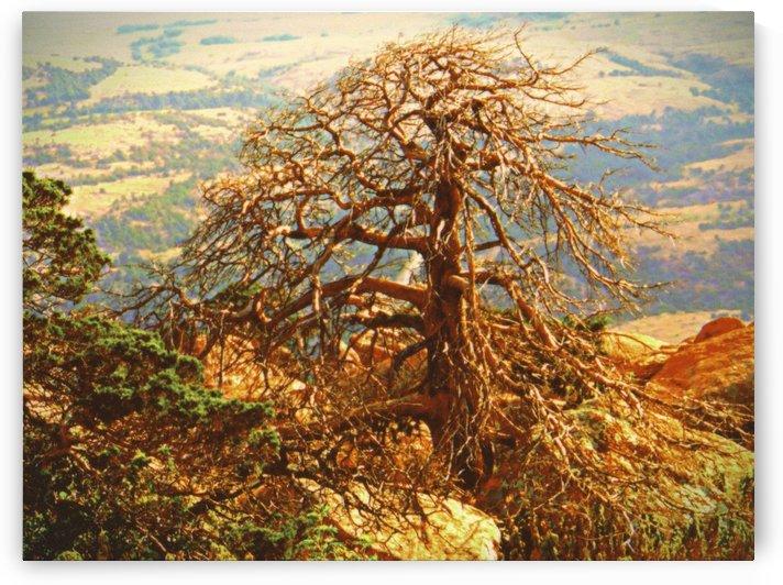 mtscotttreeone by Chazzi R  Davis