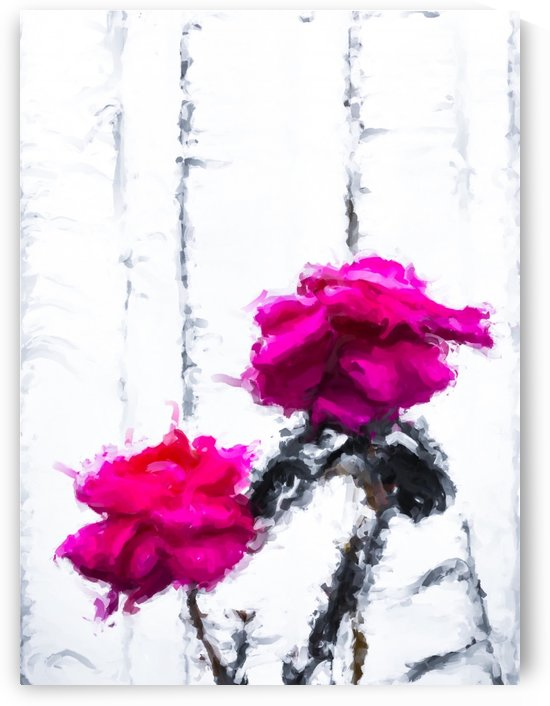 red roses with white wood background by TimmyLA