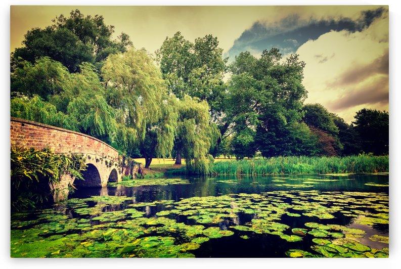 Zen Meditation Lily Pond by John D Williams