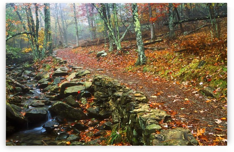 Path Through Forest, Shenandoah National Park, Virginia, Usa by PacificStock