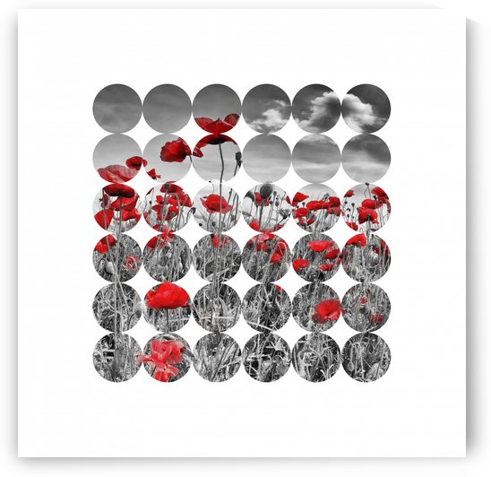 Graphic Art Poppies by Melanie Viola