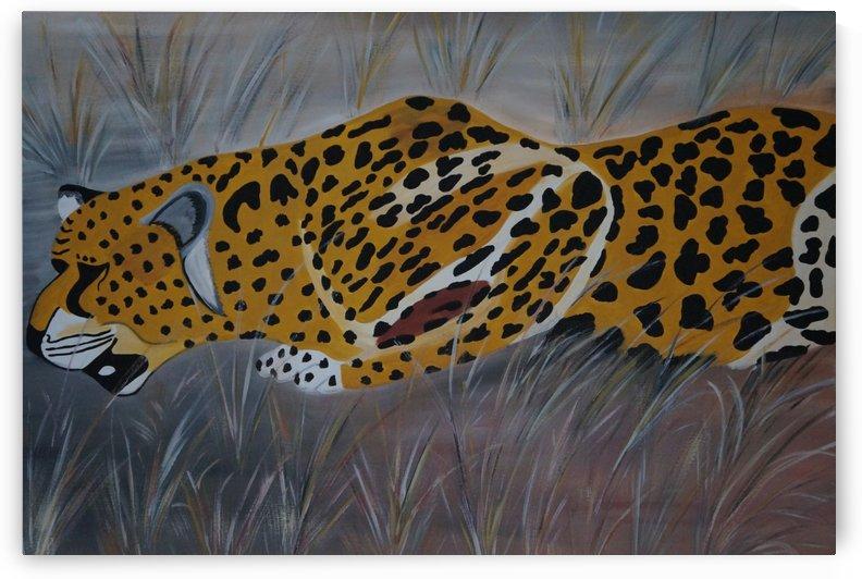 Gepard  - cheetah by Babetts Bildergalerie