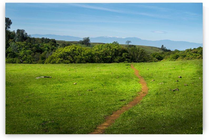 Meadow Trail by Frank Wilson