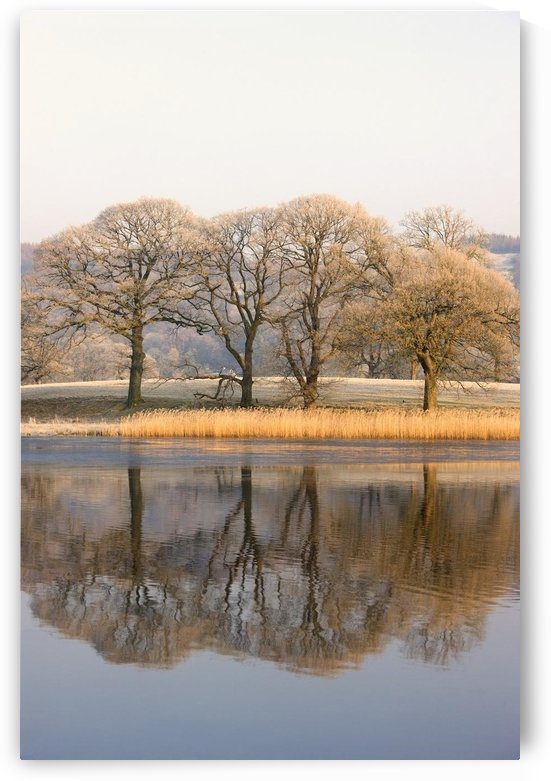 Cumbria, England; Lake Scenic With Autumn Trees Reflected In Water by PacificStock