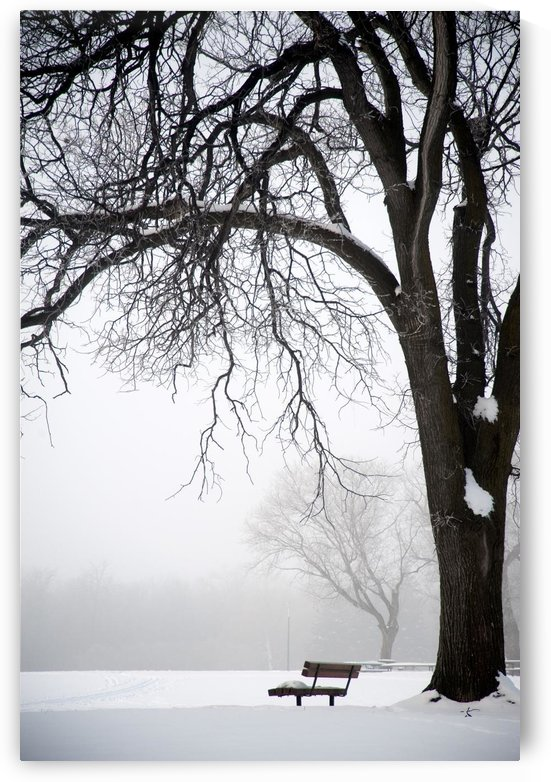 Assiniboine Park, Winnipeg, Manitoba, Canada; Bare Tree And Park Bench In Winter by PacificStock