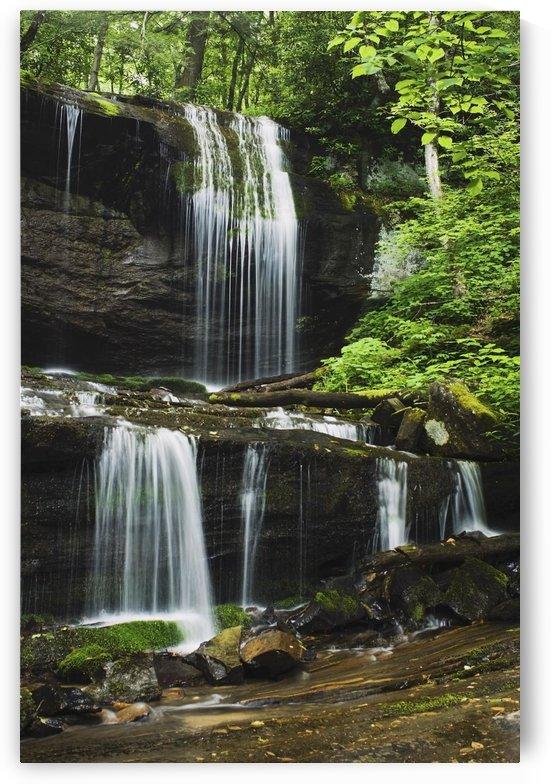 North Carolina, United States Of America; Lush Summer Foliage At Grassy Creek Falls by PacificStock