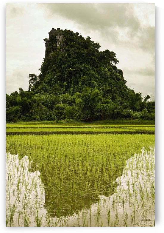 A Rice Field In Asia by PacificStock