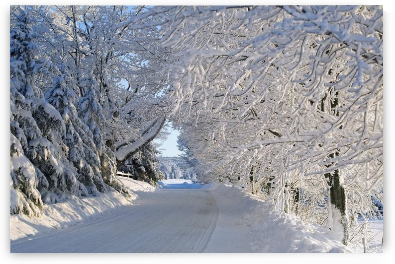 Trees Lining The Road In Winter; Quebec, Canada by PacificStock