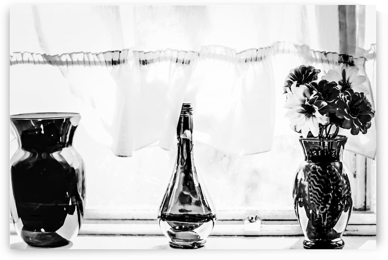 flowers in the vase in black and white by TimmyLA