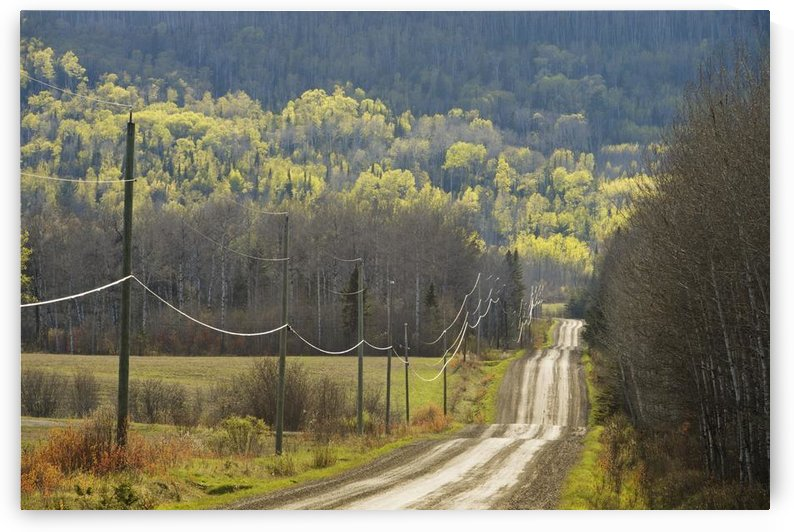 A Country Road With Electrical Wires Running Along It; Thunder Bay, Ontario, Canada by PacificStock