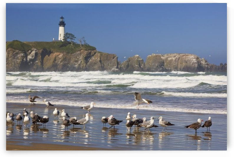 Seagulls On The Beach And Yaquina Head Lighthouse On The Oregon Coast; Oregon, Usa by PacificStock