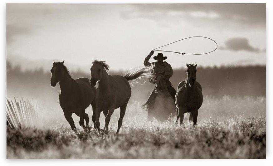 Cowboy Lassoing Horses; Senaca, Oregon, Usa by PacificStock