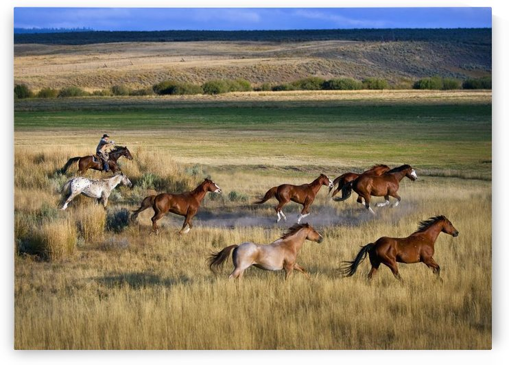 Cowboy Riding With Herd Of Horses; Senaca, Oregon, Usa by PacificStock