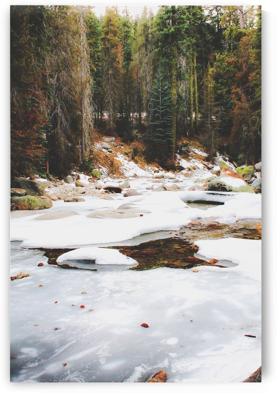 Sequoia national park, USA in winter by TimmyLA