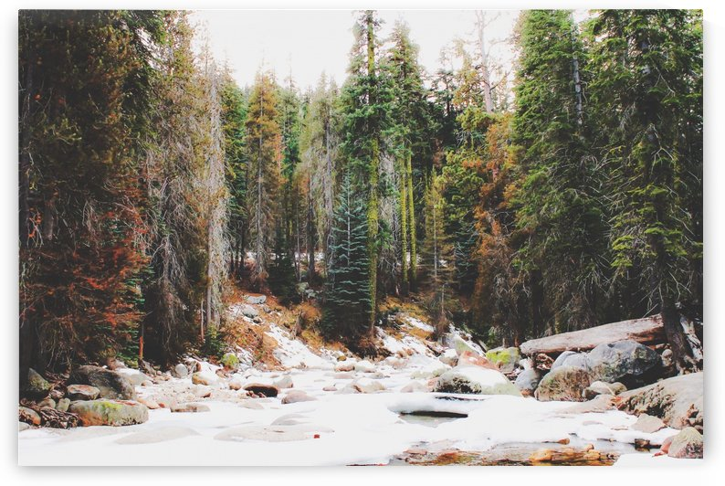 snow at Sequoia national park, USA by TimmyLA