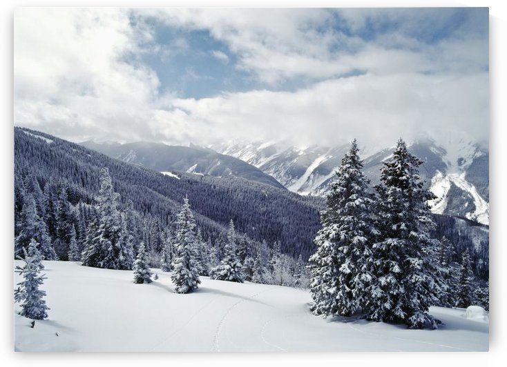 Snow Covered Pine Trees On Mountain by PacificStock