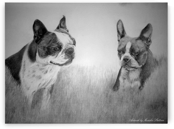 Boston Terriers by Monika Stattner