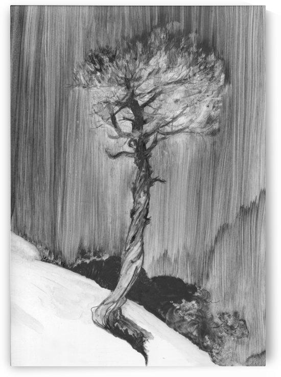 Lonely Cedar by Monika Stattner