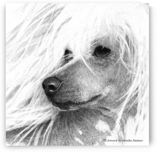 Chinese Crested Dog by Monika Stattner