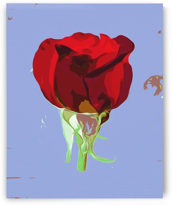drawing and painting red rose with blue background by TimmyLA